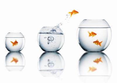 Dreisprung der Veränderung: Potenziale – Ziele – Umsetzung